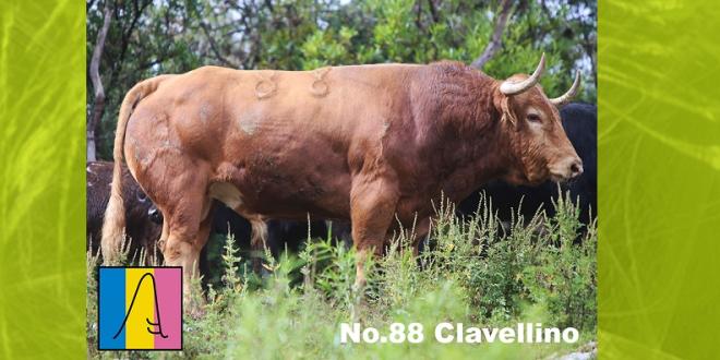 Aprueba juez Jorge Ramos los toros de Barralva para la México