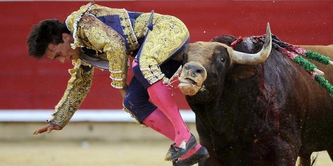¡Cuando los toros cambian la fama por la cornada!