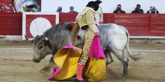 Sin orejas en Texcoco (**Fotos**)