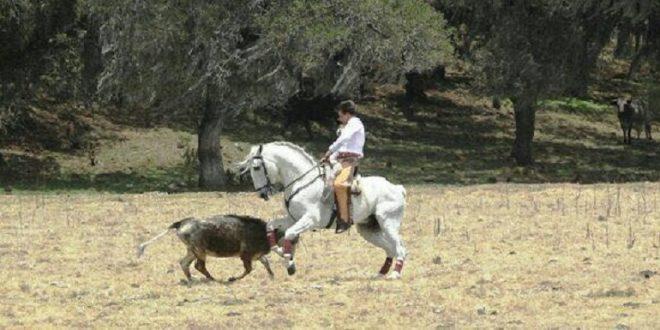 Faenas de ACOSO y DERRIBO en la prestigiada ganadería de RANCHO SECO (*Fotos*)