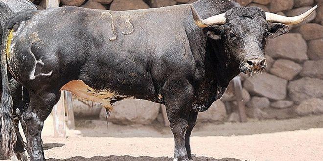 """Presentan en Tlaxcala los toros para la """"Corrida del Orgullo"""" (*Fotos*)"""