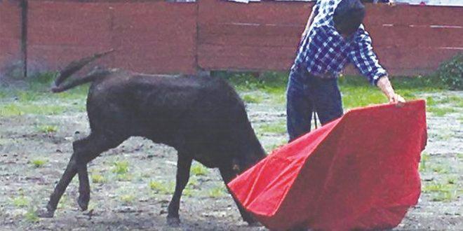 Tienta Silis en la ganadería de Santín