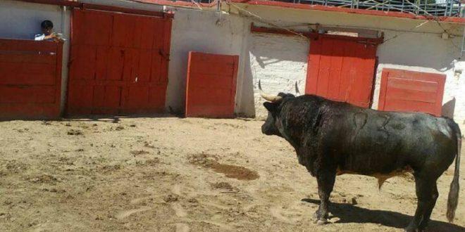 'MAESTRO' toro de Villa Carmela indultado en GUADALAJARA y Luis David ADAME se reencuentran un día después (*Fotos*)