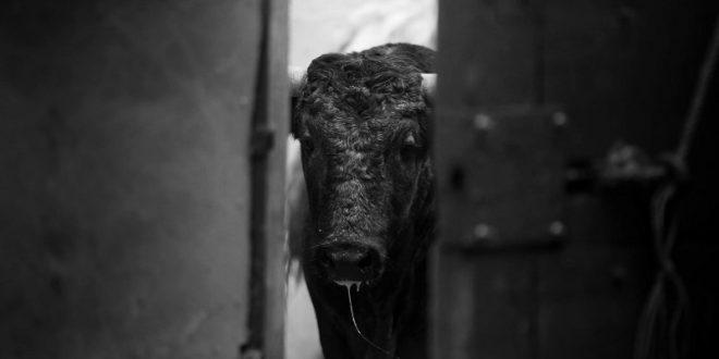 PLAZA MÉXICO: Cambian los toros para el domingo; serán de la ganadería de…