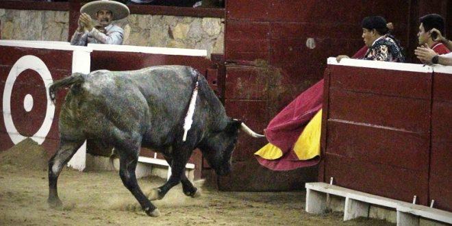 Indultan toro en Morelia