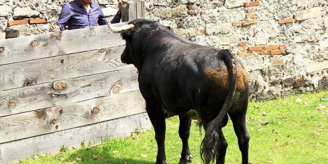 Triunfal festejo en Tijuana