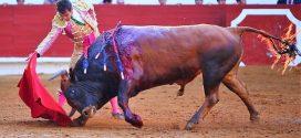 Macías, en valiente en Francia, ante toros de Miura y Palha (*Fotos*)