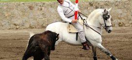 El rejoneador LUIS PIMENTEL pone a punto su cuadra con ganado de Zacatepec (*Fotos*)