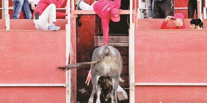 Emociona Macías con toro de indulto