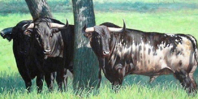 Exitosa asamblea de los criadores de toros bravos