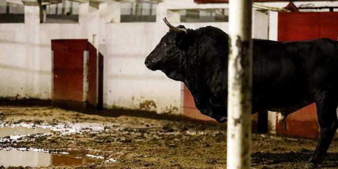 Reseñan hoy en la México los toros de SEIS GANADERÍAS para el festejo del ESTOQUE de ORO