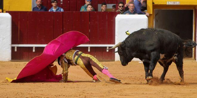 Toros y toreros ofrecen un gran espectáculo en la matinal de Olivenza