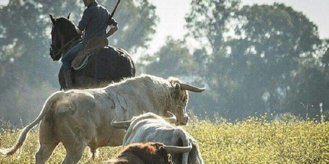 Unidos, el caballo y el toro en programa de TV que se transmitirá en México