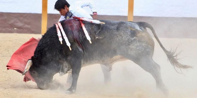 Lidia 'El Mojito' arrogante e imponente toro de De Haro