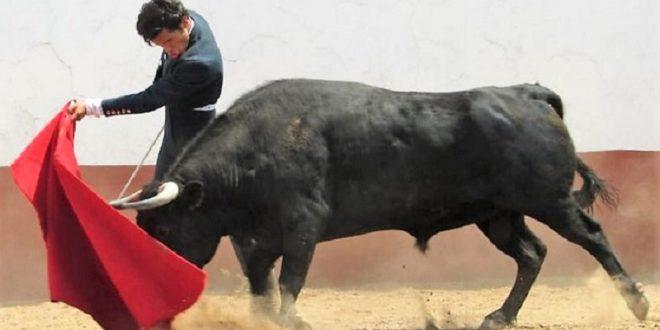 Francisco Martínez se prueba con seis toros