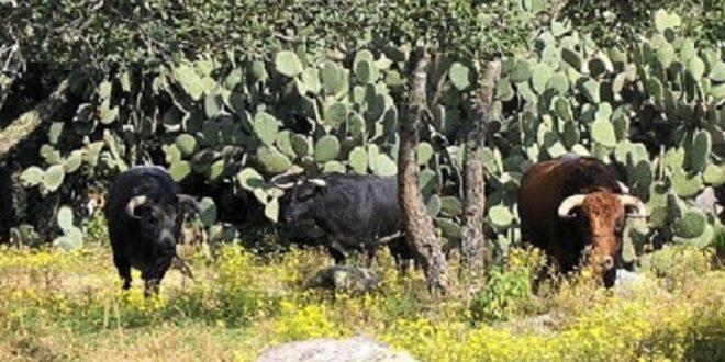 Coloquios taurinos en la UTNA… En la I Ruta del Vino