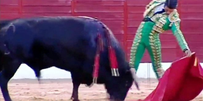 Calidad y aplomo de 'El Calita' en Villamalea, Albacete
