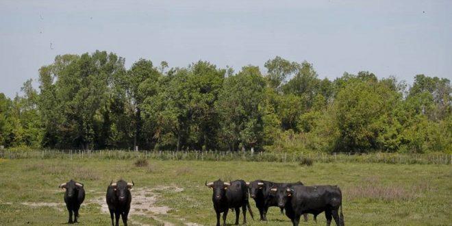 El 26 de febrero celebran ganaderos asamblea