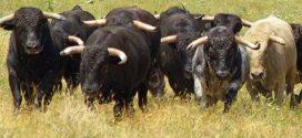 El 26 de febrero, asamblea de los ganaderos