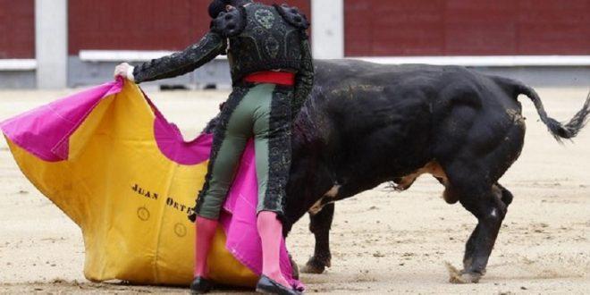 Sendas Orejas de Oro a Ortega y Ponce