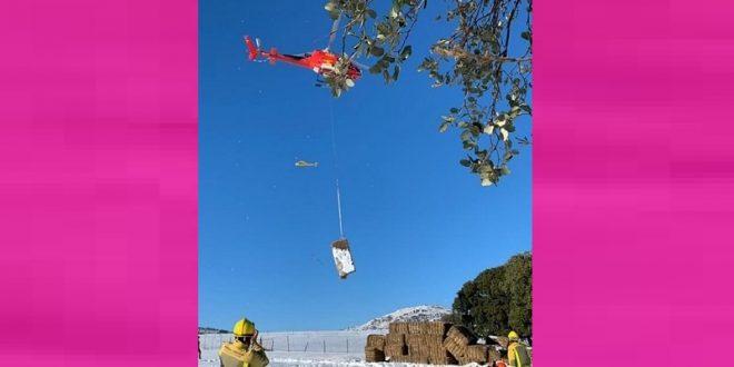 En helicóptero transportan alimento a ganaderías, por nevadas en España