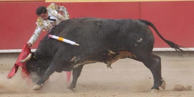 SEBASTIÁN IBELLES enfrenta IMPONENTES toros… Se prepara para varias fechas, encerrona incluida (*Fotos*)