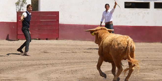 TIENTA DE MACHOS, en LA JOYA (*Fotos*)