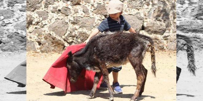 'Torero' de cinco años, seis meses y trece días de edad