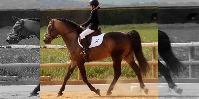 Caballo de Hermoso de Mendoza, del ruedo a las pistas (*Fotos*)