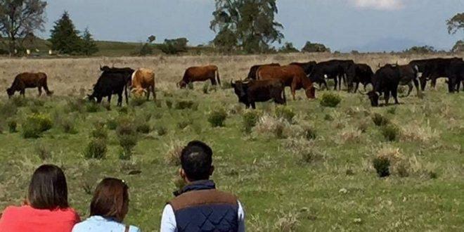 Toro-Tours fomenta turismo y tauromaquia