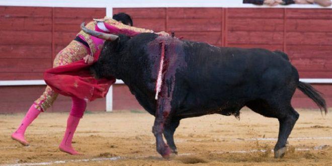 Desoreja CALITA a sus dos toros en EL VALLE DEL TERROR (*Fotos*)